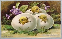 Karte zu Ostern,  Ei, Kücken, 1910, Prägung