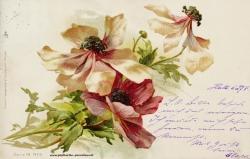 Grusskarte, Blüten, verblüht, 1899