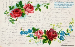 Grusskarte, Rosen, rot, Gedicht. 1906