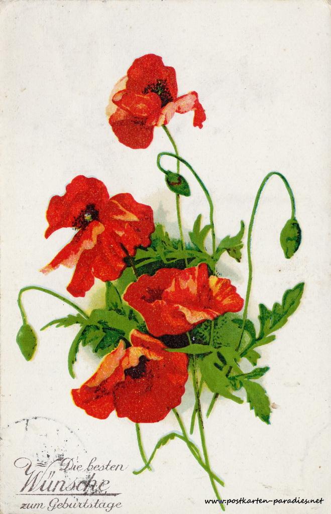 Geburtstagsgrüße,Postkarte Blumen rot Mohn 1932