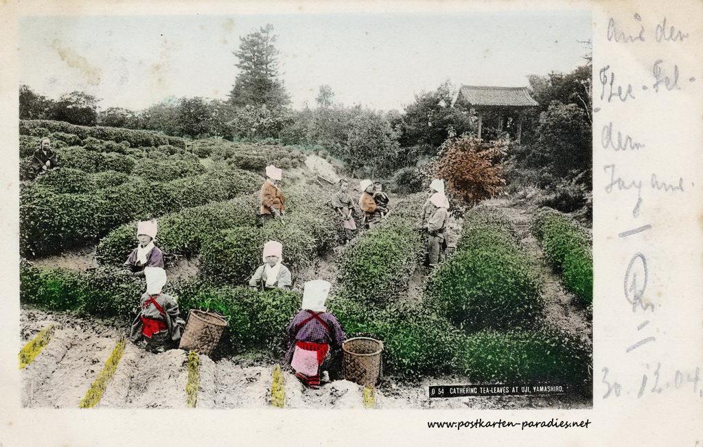 Japan Teepflücker 1904