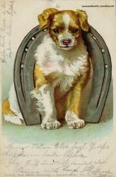 Haustier Hund
