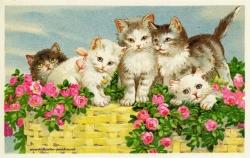 Haustier Katze